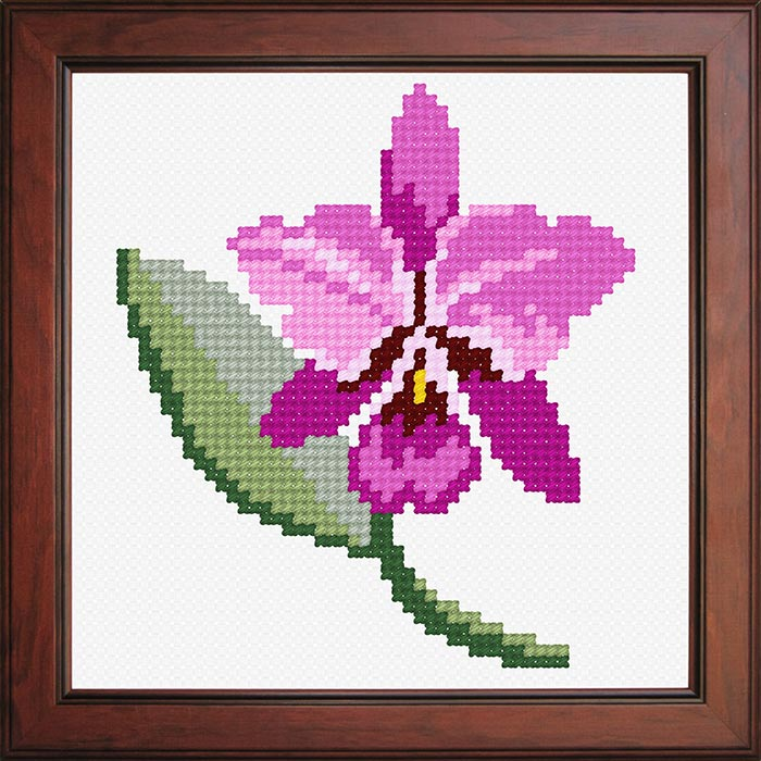 O1154 — Орхідея